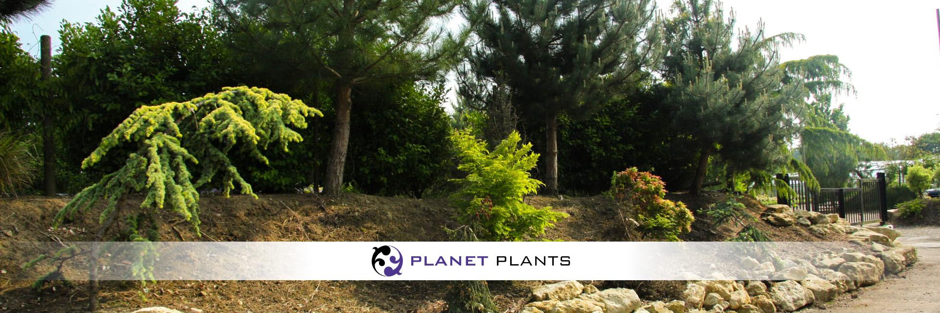 Planet Plants