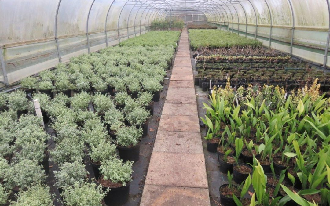 Early Spring Open Day
