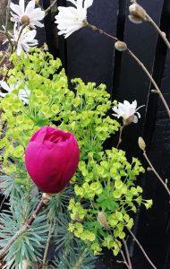 Big Spring Event! @ Planet Plants | Ightham | England | United Kingdom